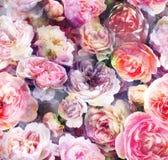 Modelo con las rosas y las peonías de neón brillantes Imagen de archivo