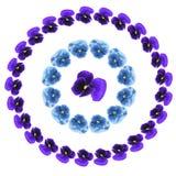 Modelo con las violetas Foto de archivo