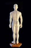 Modelo da acupunctura Foto de Stock Royalty Free