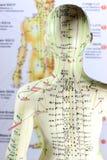 Modelo 04 da acupuntura Foto de Stock