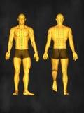 Modelo da acupuntura, ilustração 3D Imagem de Stock Royalty Free