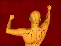 Modelo da acupuntura, modelo 3D Imagens de Stock