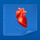 Modelo da estrutura do coração ilustração do vetor