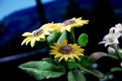 Modelo da flor Fotos de Stock