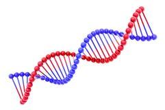 Modelo da hélice do ADN isolado no branco Fotografia de Stock