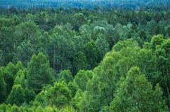 Modelo de capas de los árboles forestales, árboles de hoja perenne en las montañas Foto de archivo libre de regalías