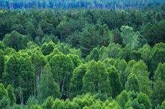 Modelo de capas de los árboles forestales, árboles de hoja perenne en las montañas Fotos de archivo libres de regalías