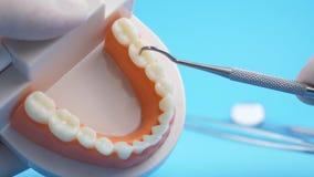 Modelo de enseñanza de examen del doctor de gomas y de dientes para el dentista almacen de metraje de vídeo
