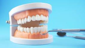 Modelo de ense?anza de examen del doctor de gomas y de dientes para el dentista almacen de metraje de vídeo