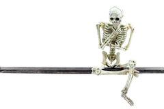 Modelo de esqueleto no fundo branco Fotografia de Stock