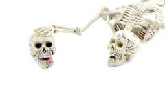 Modelo de esqueleto no fundo branco Foto de Stock