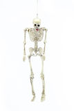 Modelo de esqueleto pendurado no fundo branco Foto de Stock
