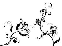 Modelo de flor Ilustración del Vector