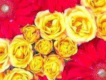 Modelo de flor Fotos de archivo