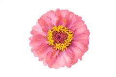 Modelo de flor fotografía de archivo libre de regalías