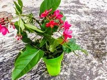 Modelo de flor decorativo Fotografía de archivo libre de regalías