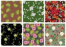 Modelo de flores inconsútil Fotos de archivo libres de regalías