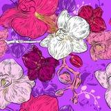 Modelo de flores inconsútil de la orquídea Foto de archivo libre de regalías