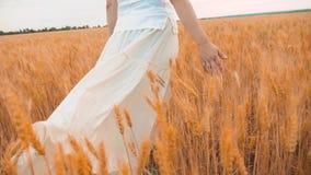 Modelo de forma positivo do tamanho no vídeo de movimento lento que anda no trigo do campo a mulher gorda na natureza na grama do video estoque