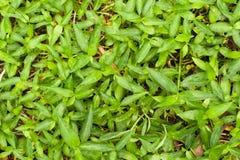 Modelo de hierbas verdes como fondo Foto de archivo libre de regalías