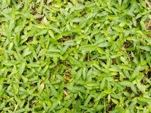 Modelo de hierbas verdes como fondo Foto de archivo