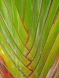 Modelo de hojas Fotografía de archivo