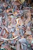 Modelo de hojas Fotos de archivo