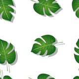 Modelo de hojas de palma ilustración del vector