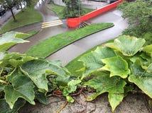 Modelo de la acera, de la hiedra y de la hierba Fotografía de archivo