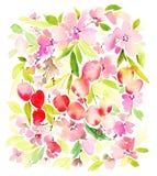 Modelo de la acuarela de la cereza stock de ilustración