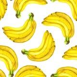 Modelo de la acuarela de los plátanos ilustración del vector