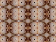 Modelo de la concha marina Fotografía de archivo libre de regalías