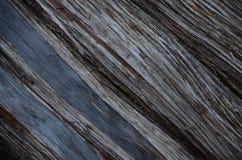 Modelo de la corteza de árbol del desierto Imagen de archivo