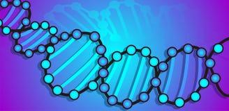 Modelo de la DNA Imagenes de archivo