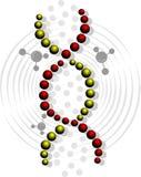 Modelo de la DNA Fotografía de archivo libre de regalías