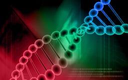Modelo de la DNA Foto de archivo libre de regalías