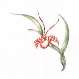 Modelo de la esquina de la orquídea Fotos de archivo libres de regalías