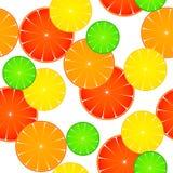 Modelo de la fruta cítrica Foto de archivo libre de regalías