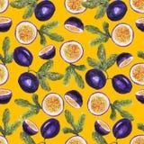 Modelo de la fruta de la pasión en amarillo libre illustration