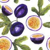 Modelo de la fruta de la pasión en blanco ilustración del vector