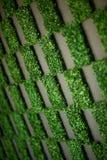 Modelo de la hierba Fotografía de archivo libre de regalías