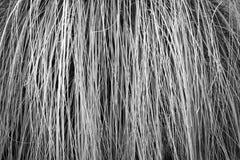 Modelo de la hierba Imagenes de archivo