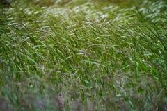Modelo de la hierba del campo foto de archivo