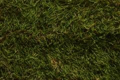 Modelo de la hierba verde Fondo del prado fotografía de archivo