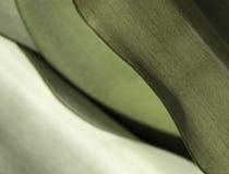 Modelo de la hoja Imagenes de archivo