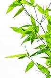 Modelo de la hoja de bambú Imagenes de archivo