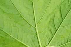 Modelo de la hoja verde Foto de archivo libre de regalías