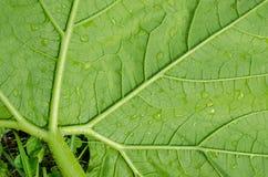 Modelo de la hoja verde Fotografía de archivo