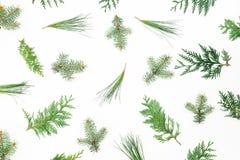 Modelo de la Navidad de las ramas de árbol del invierno en el fondo blanco Fondo del día de fiesta Endecha plana, visión superior fotografía de archivo libre de regalías