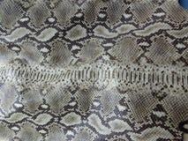 Modelo de la piel de la serpiente de cascabel de Diamondblack Imagen de archivo